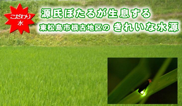 源氏ぼたるが生息する東松島市根古地区のきれいな水源
