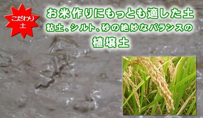 お米作りにもっとも適した土 粘土、シルト、砂の絶妙なバランスの植壌土
