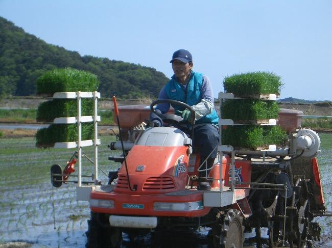 お米作り 田植え