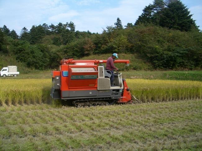 9月後半〜10月前半 稲刈りの様子